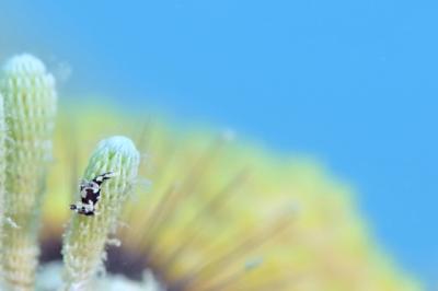 モウサンウミウシ