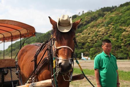トロッコ亀岡駅の馬