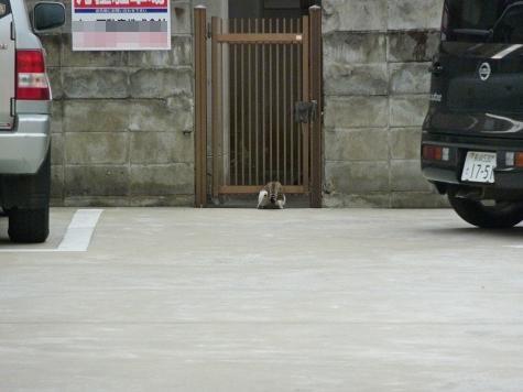 壱岐猫004