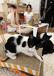 青森県初の猫カフェオープン1