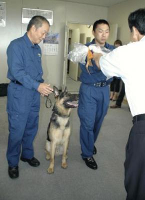 警察犬「ウイン号」、枕カバーの臭いで不明男性発見1