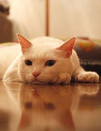 猫がさわられる前からゴロゴロ言っている件について1