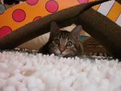 青森県初の猫カフェオープン2