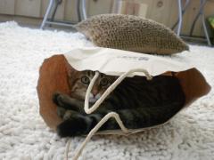 青森県初の猫カフェオープン3