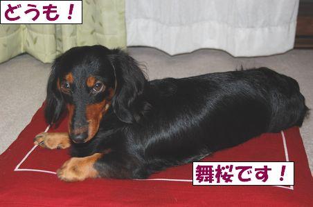 20100919-2.jpg