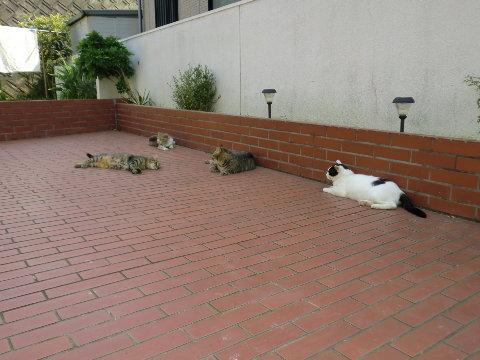 ランド内の猫