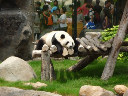 オーシャンパークのパンダ