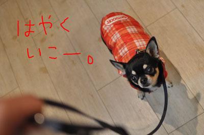 111212-chura-3.jpg