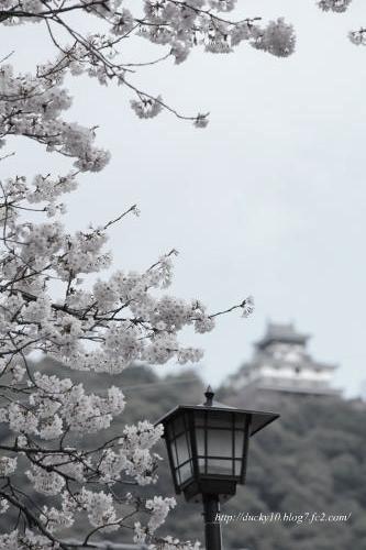 桜&岩国城