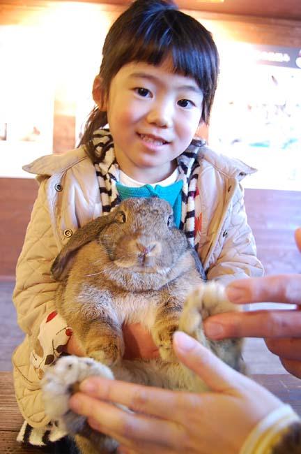 ウサギの抱いたよ