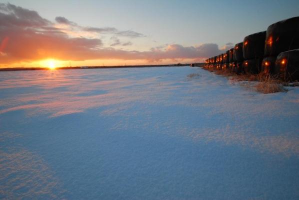 牧草地の夕日