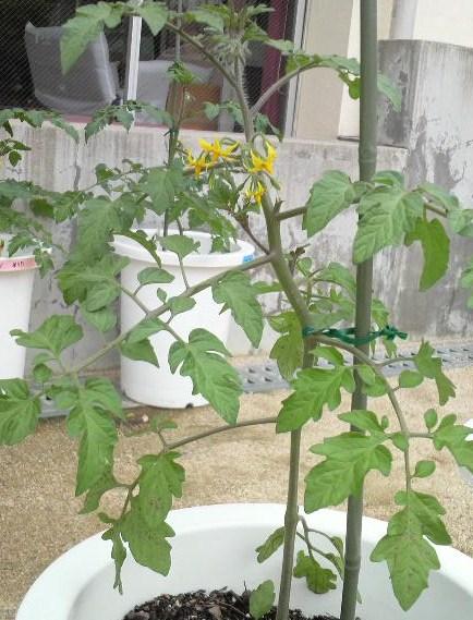 季節の野菜4