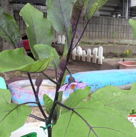 季節の野菜3