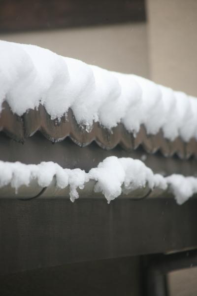 雪2012-1