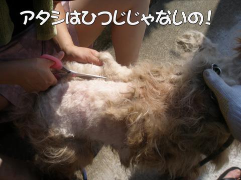 003_20120316222432.jpg