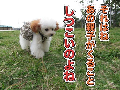03_20111106004440.jpg
