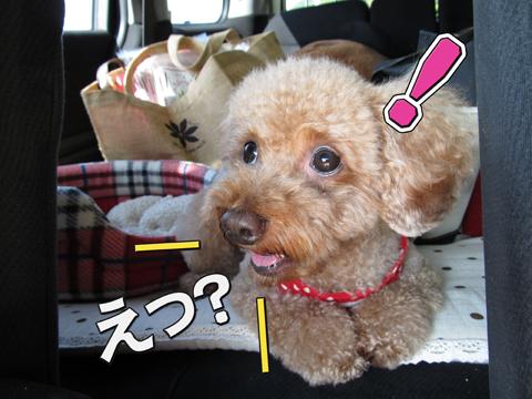 04_20111105000754.jpg
