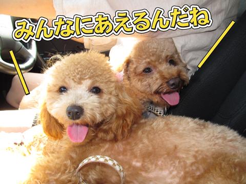 06_20111105000753.jpg