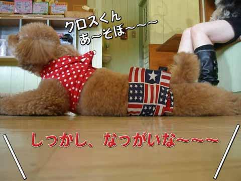 07_20110205001023.jpg