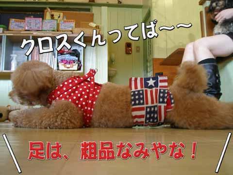 08_20110205001023.jpg