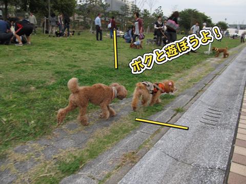09_20111108234236.jpg
