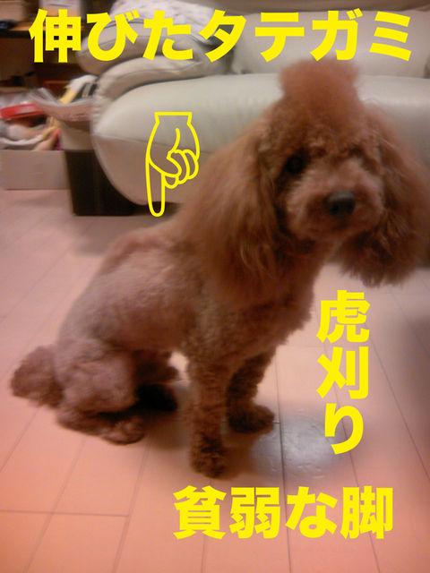09_20120426182400.jpg