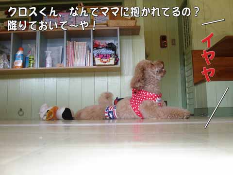 10_20110205000955.jpg