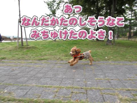 10_20111106004405.jpg