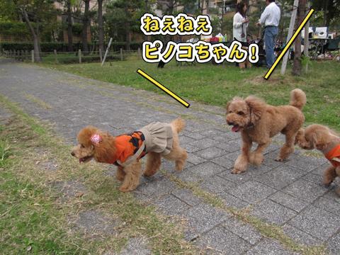 10_20111108234235.jpg
