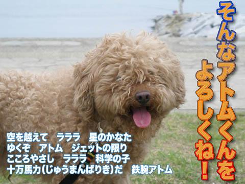 10_20120501085626.jpg