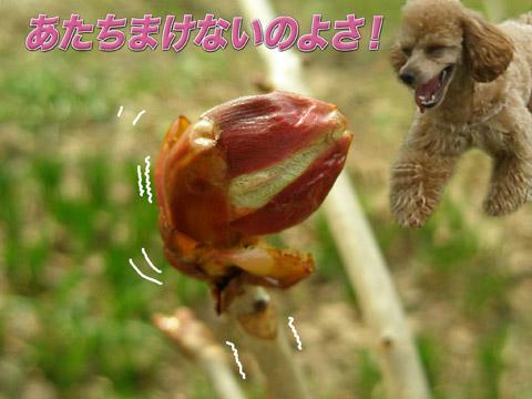 10_20120511162118.jpg