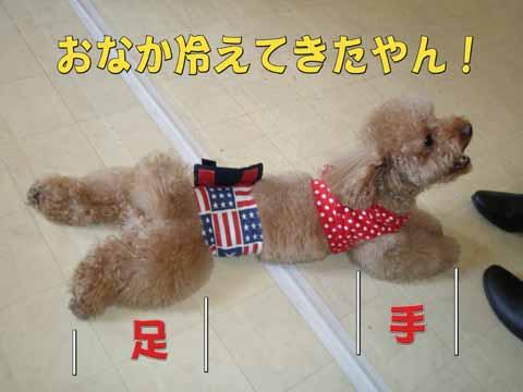 11_20110205000954.jpg