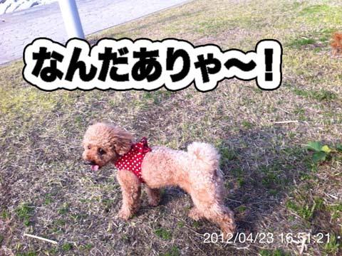 11_20120425182454.jpg