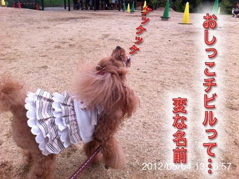 11_20120506165240.jpg