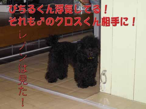 13_20110205000952.jpg