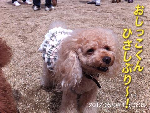 13_20120506165238.jpg