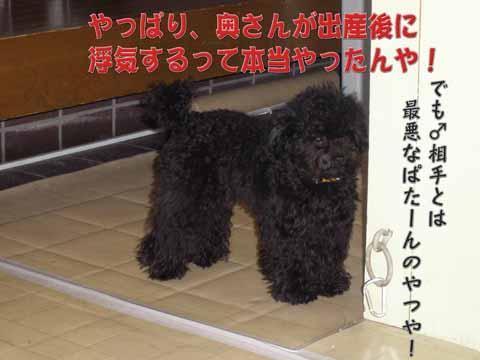 14_20110205000952.jpg