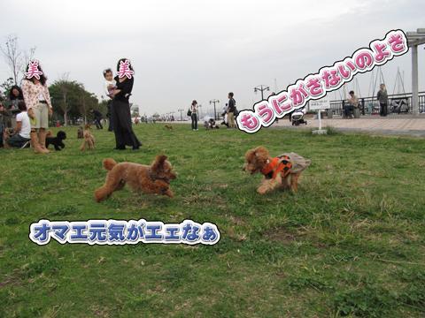 14_20111106004328.jpg