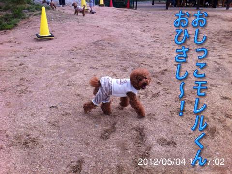 14_20120506165237.jpg