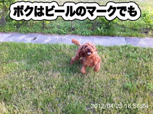 15_20120425182449.jpg