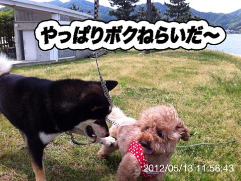 15_20120519011313.jpg