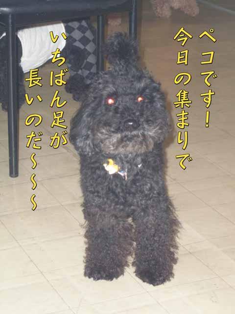 16_20110205000922.jpg