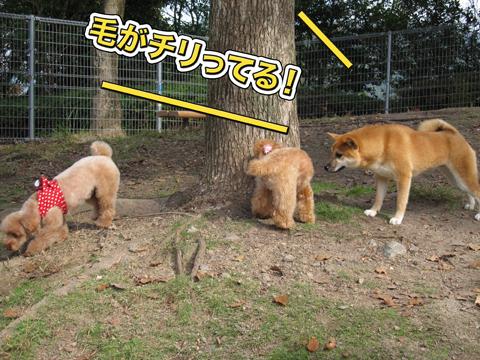 16_20111105005108.jpg
