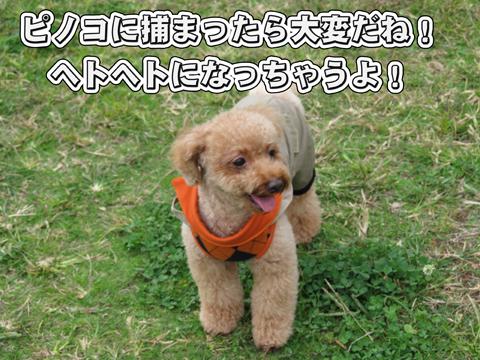 16_20111106004324.jpg