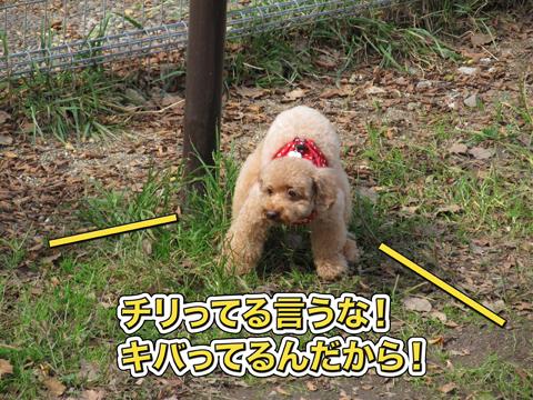 17_20111105005050.jpg