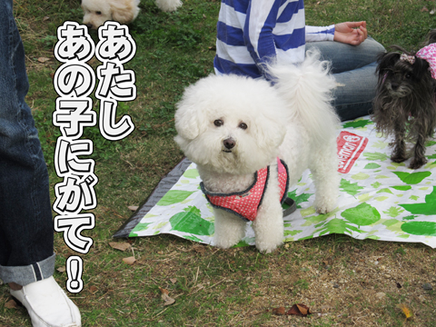 17_20111106004324.jpg