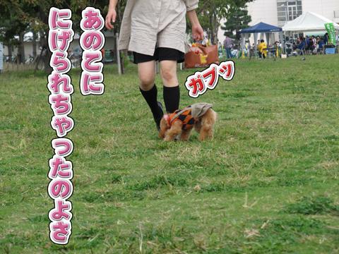 20_20111106004244.jpg