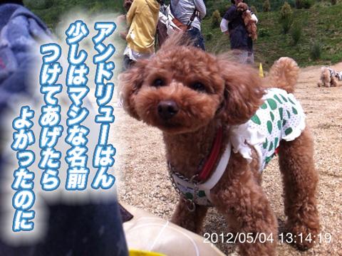 20_20120506165204.jpg
