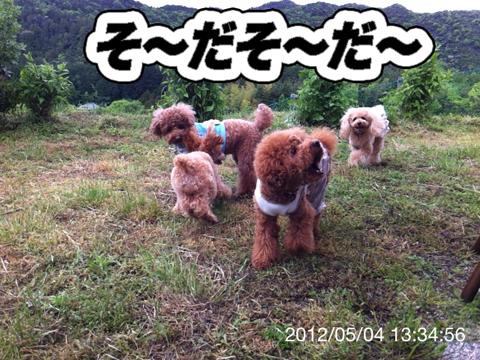21_20120506165133.jpg