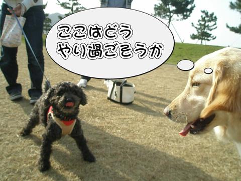 26_20120406214328.jpg